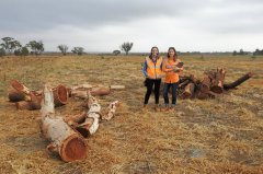 Melbourne Metro Rail Authority inspecting logs in Pinkerton Link