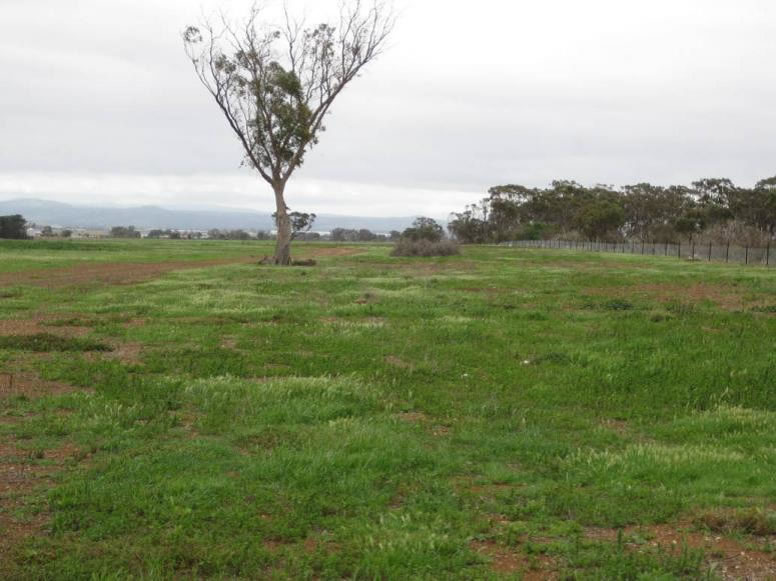 16/10/2009 Sludge Paddock - Greening Australia
