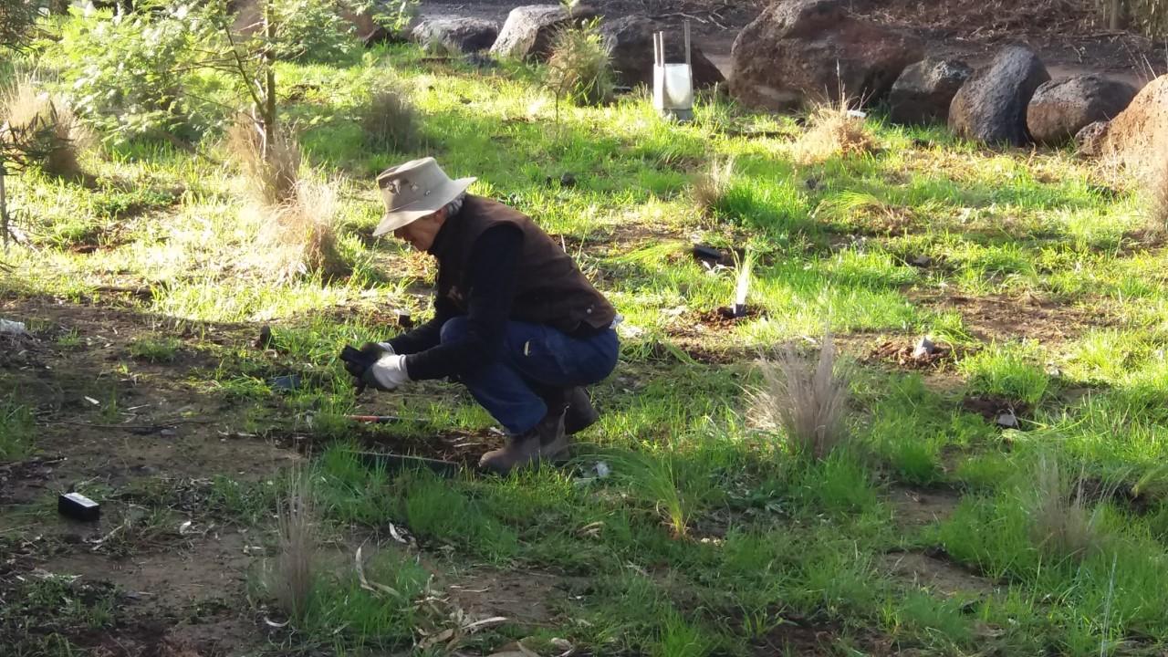 Irene planting at Cobbledicks Ford