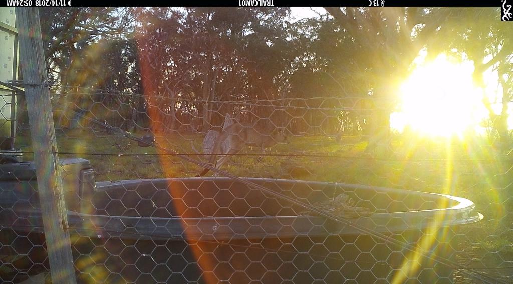 Kangaroo-at-sunrise-1ed.jpg