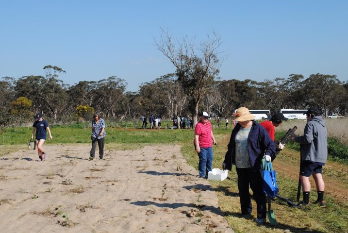 Students and volunteers planting at Pinkerton Link on  the large jute mat 'islands'