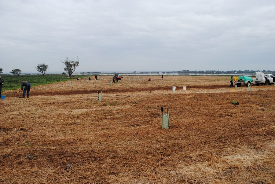 2011-ew-planting-highnutient.jpg